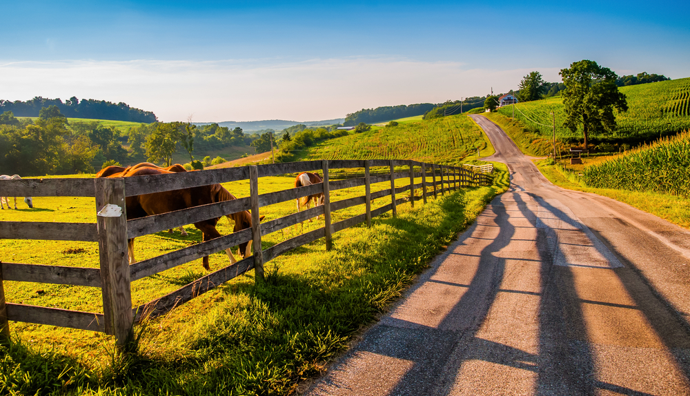 Wide open country dirt road with horses behind fence